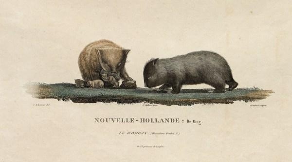 Art of Science wombats no. 4