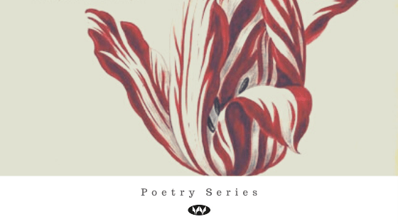 Poetry Spotlight: Kate Llewellyn