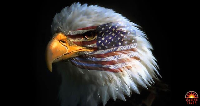 Image result for The Worldly Patriot Eagle