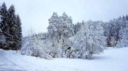 Wald Kobel im Schnee