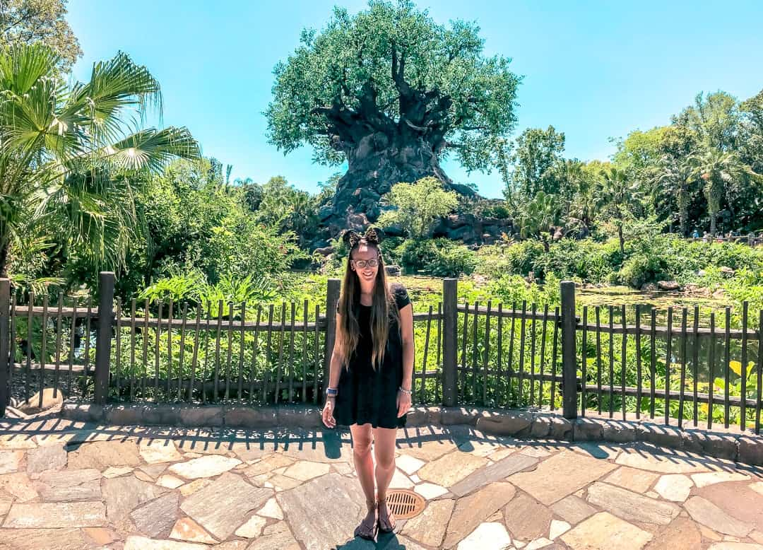Animal Kingdom tree of life panoramic
