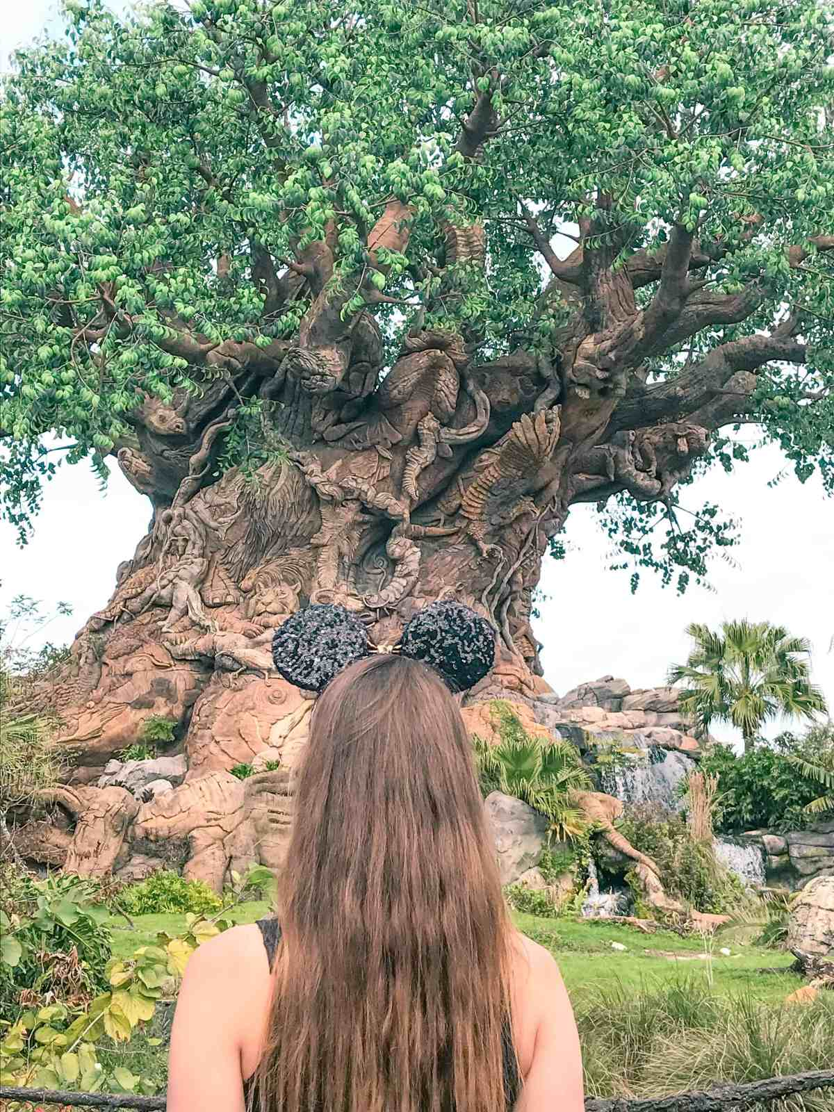 animal kingdom fastpass hacks