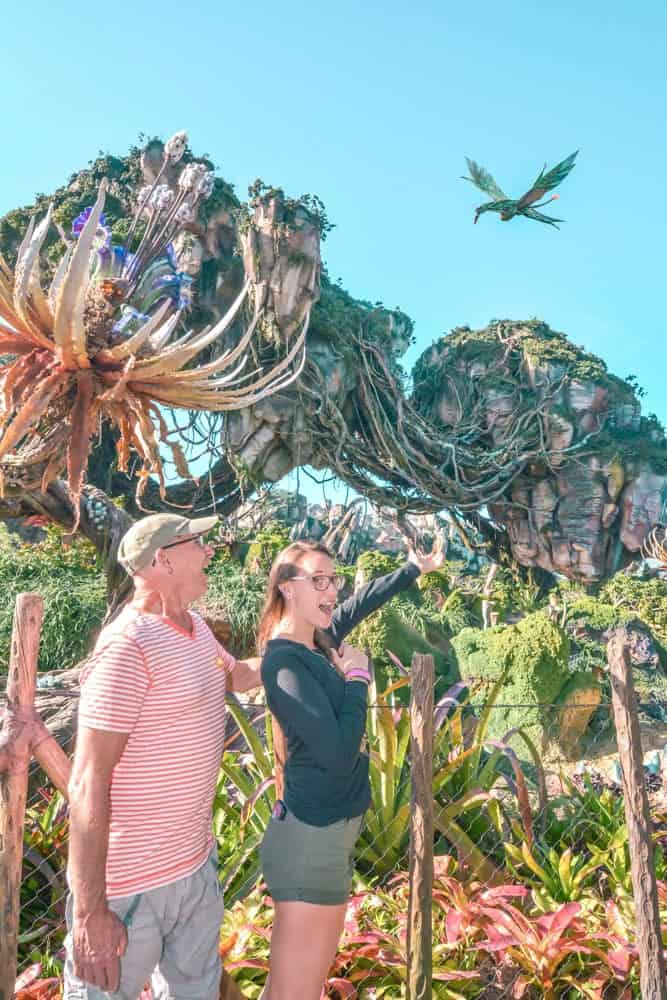 Flights of passage at Pandora