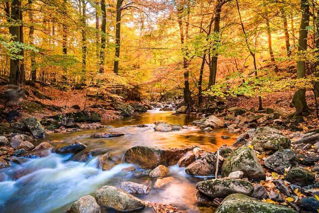 fall in the niagara escarpment