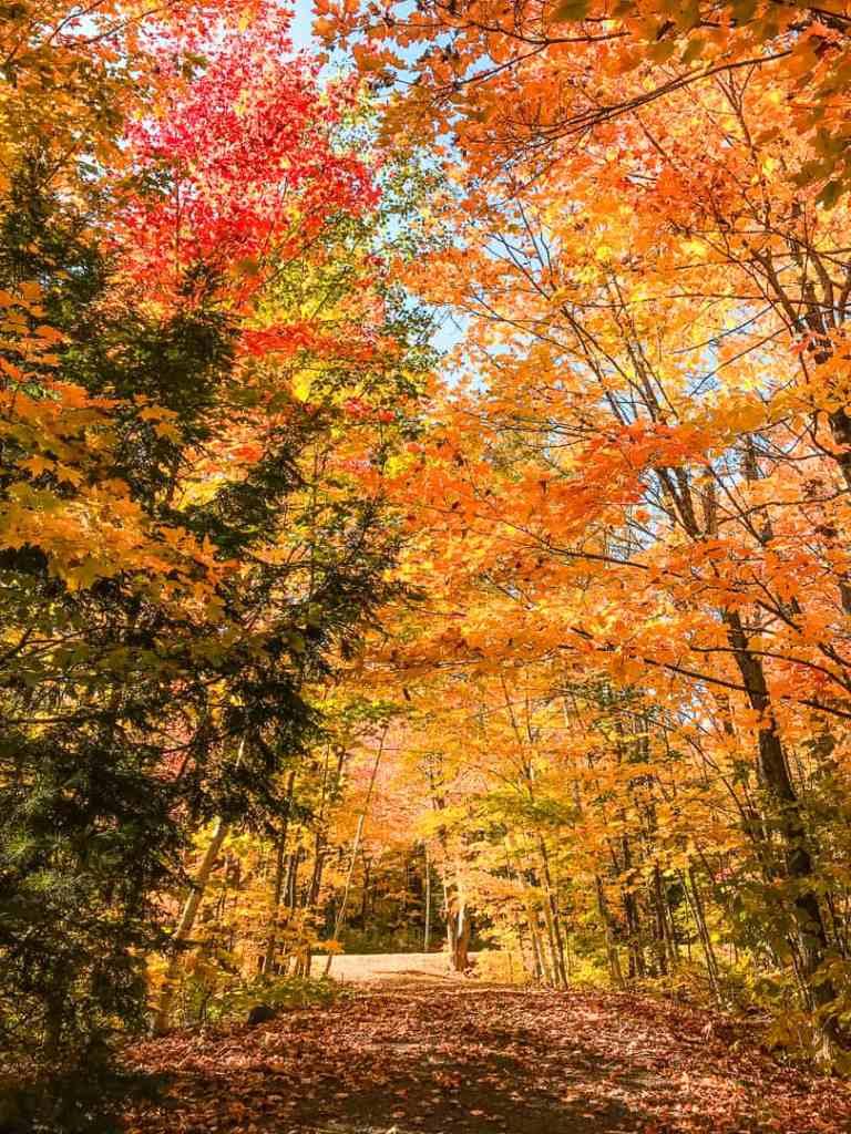 fall foliage in canada