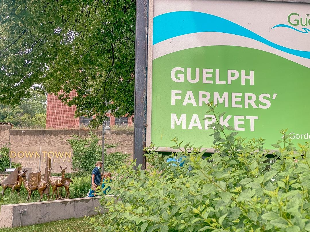 Guelph farmers market downtown