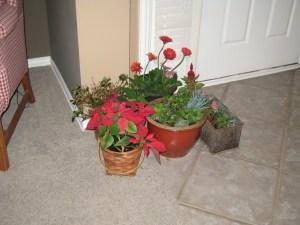 Plant Slumber Party