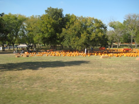 Birthday and the pumpkin patch 010