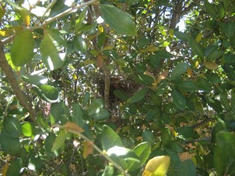 Bird nest 003