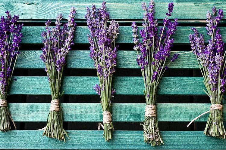 10 Rustic Country Kitchen Décor Ideas for Your Homestead - Cut lavender posies are perfect for adorning walls and shelves, place them in storage boxes to deter pests and keep items smelling fresh.