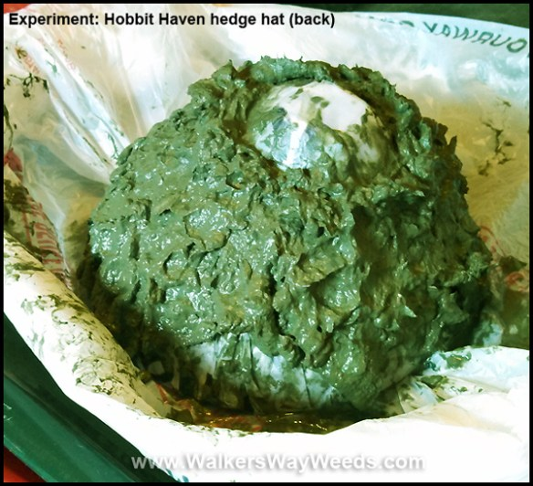Papercrete Hobbit Haven Hedge-back