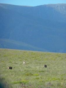 Blog Zebra mountains