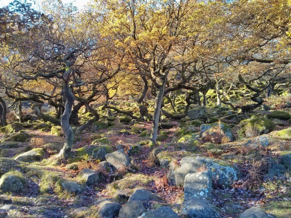 Trees at Padley Gorge