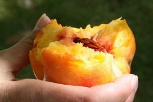 Peach by Rosemary Washington