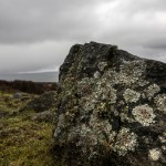 Rock covered in Lichen