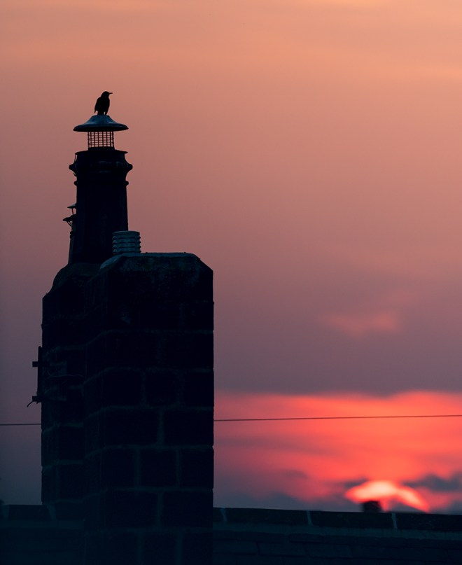 Silhouetted Starling on Chimney with sunset