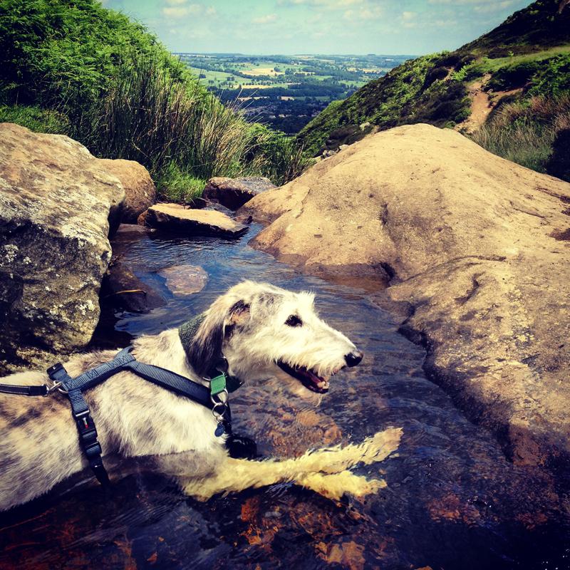 Pet dog Alfie sitting on stream on Burley Moor