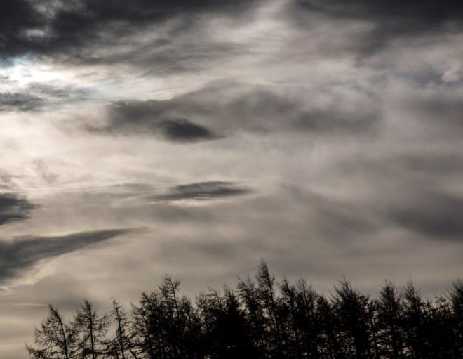 Line of trees against sky