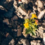 Flowering plant grows out of the rubble