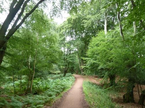 Essex Walks Centenary Walk Epping Forest Walking Route
