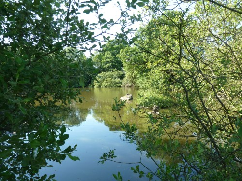Walks And Walking in Essex - Epping Forest - Connaught Water - The Centenary Walk