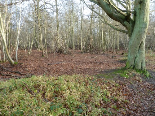 Hatfield Forest Walks Walking Routes December 2011 Christmas Eve