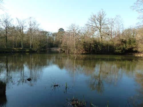 Essex Walks - Epping Forest - Strawberry Hill Pond