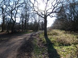 Walks And Walking - Essex Walks Epping Forest Queen Elizabeth's Hunting Lodge Walking Route - Centenary Walk