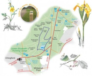Walks And Walking - Essex Walks - Epping Forest Walks - The Willow Trail