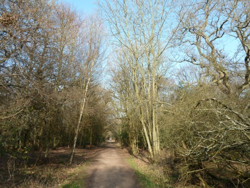 Walks And Walking - Essex Walks Epping Forest Willow Trail Walking Route - Wide Gravel Track