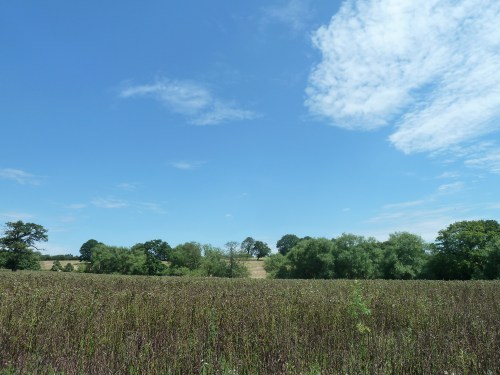 Walks And Walking - Essex Walks Epping Forest District Walking Route - Broad Beans