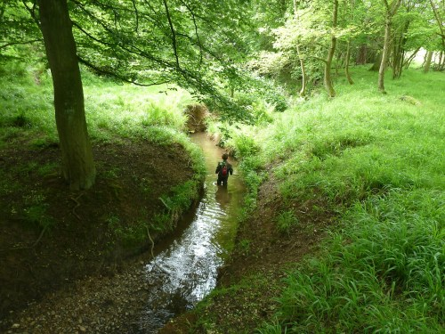 Walks And Walking - Epping Forest Horseshoe Hill Walking Route - Tedi Wades Down The Stream