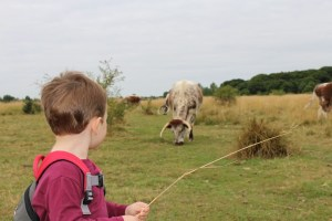Tedi with the long horn cattle in Chingford Plain Canon EOS 100D Camera Epping Forest