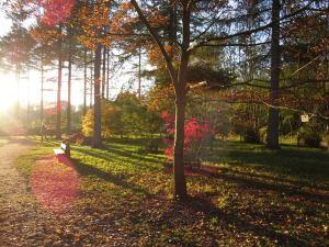 Walks And Walking - Westonbirt Arboretum in the autumn