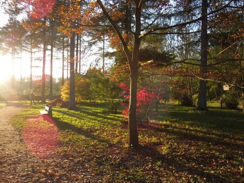 Walks And Walking - Westonbirt Arboretum in the autumn