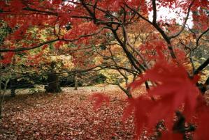 Walks And Walking - Westonbirt Arboretum Walks