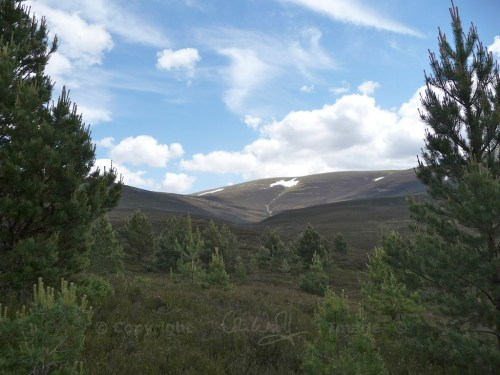 Scotland Walks - A Midsummer Walk Up Carn Ban Mor In The Cairngorms - JWoolf Carn Ban Mor 1