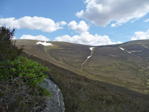Scotland Walks - A Midsummer Walk Up Carn Ban Mor In The Cairngorms - JWoolf Carn Ban Mor 2