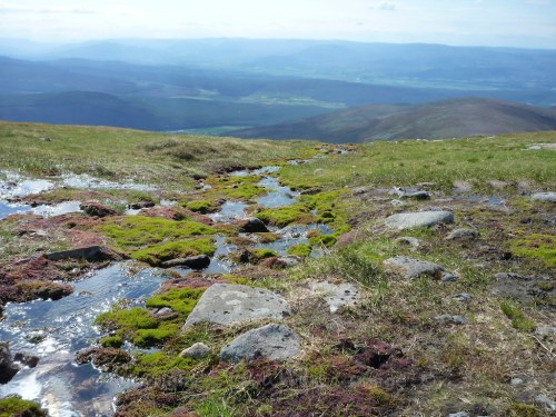 Scotland Walks - A Midsummer Walk Up Carn Ban Mor In The Cairngorms - JWoolf Carn Ban Mor 5