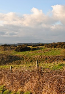Walks And Walking - Top 3 Walks in Stratton Dorset - Grimstone Down Settlement