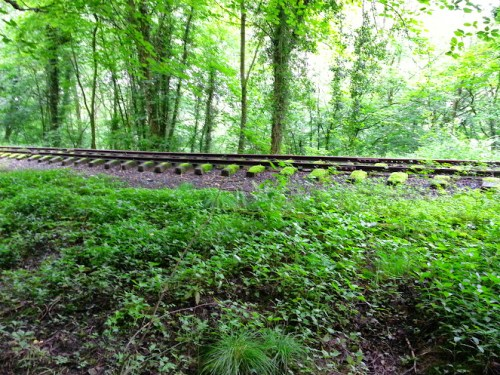 Walks And Walking - Newburn Farm Kington Walking Route - Disused Railway Along Offas Dyke