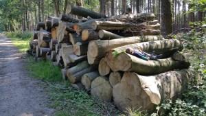 Walks And Walking - Lyminge Forest Walk In Kent - Log Piles