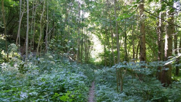 Walks And Walking - Lyminge Forest Walk In Kent - Madams Wood