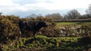 Walks And Walking - Brede Walk in East Sussex - Doleham Farm