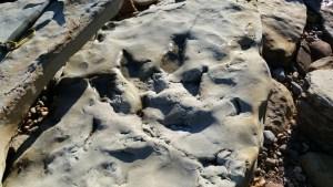 Walks And Walking - Fairlight Cove Dinosaur Walk in East Sussex - Dinosaur Footprint