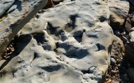 Walks And Walking - Fairlight Cove Dinosaur Walk in East Sussex - Dinosaur Footprint
