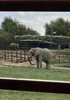 Animal Park Elephants in Kent