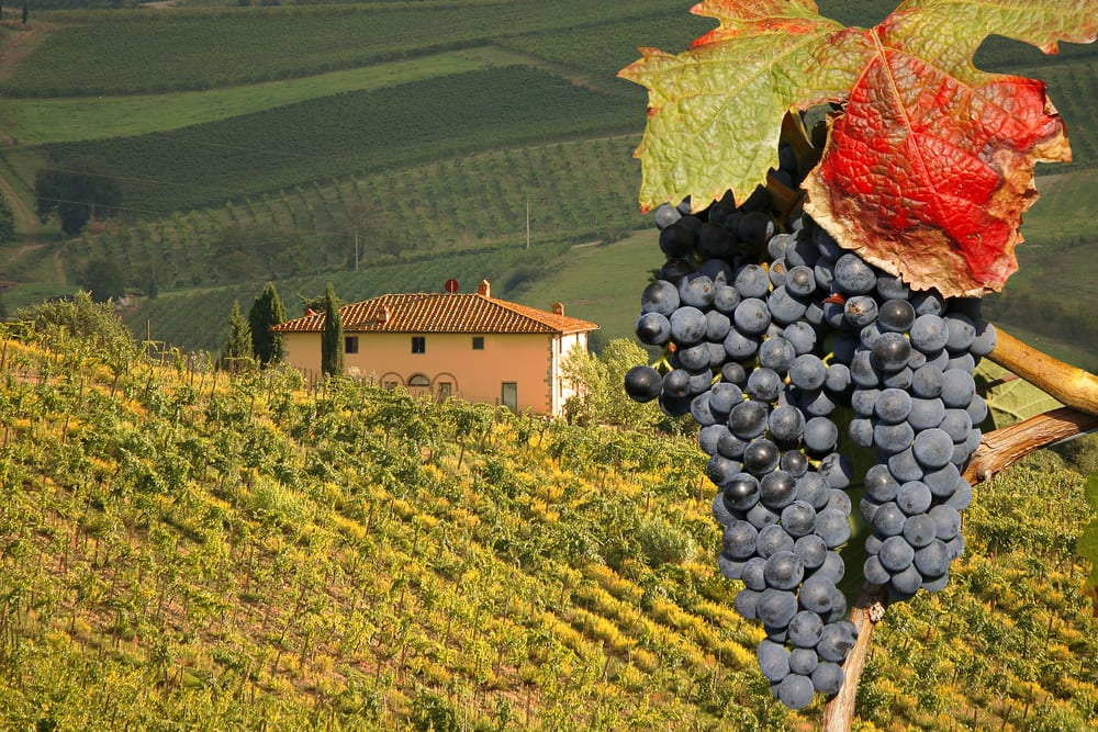 Image result for Chianti Country