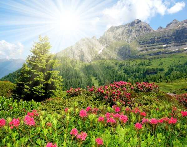 Flowers blooming in the Dolomites' Brenta pass
