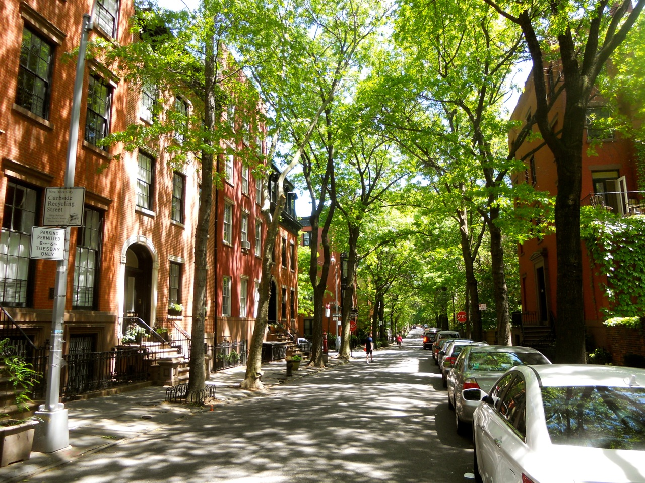 Tree Lined Neighborhoods